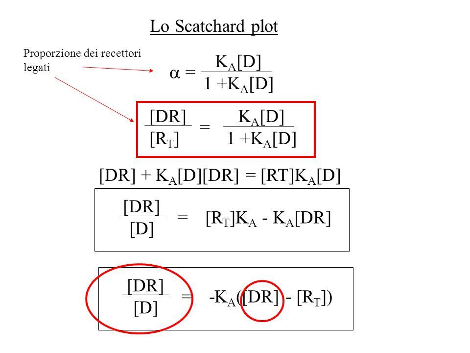 [DR] + KA[D][DR] = [RT]KA[D]